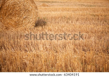 Roll of hay in the fall field - stock photo