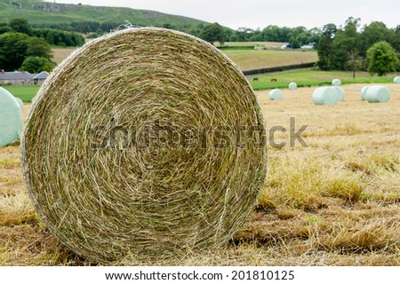 Rolled bales of hay to be wrapped and made into haylage. - stock photo