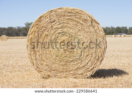 Rolled up hay bale on wheat field or dry meadow after harvest in rural agricultural countryside, blurred background farmland and copy space. - stock photo