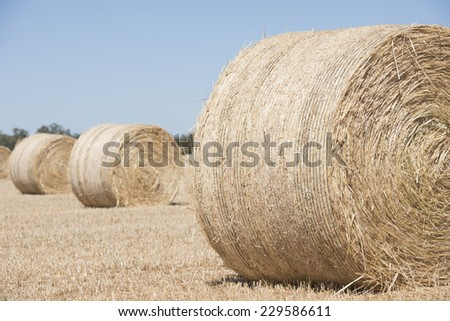 Rolled up hay bales on wheat field or dry meadow after harvest in rural agricultural farmland, blurred background and copy space. - stock photo