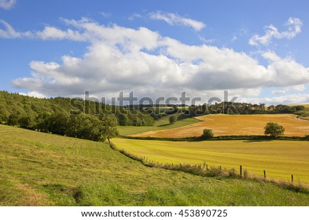rolling agricultural scenery in the yorkshire wolds with ripening crops and woodlands under a blue cloudy sky in summer