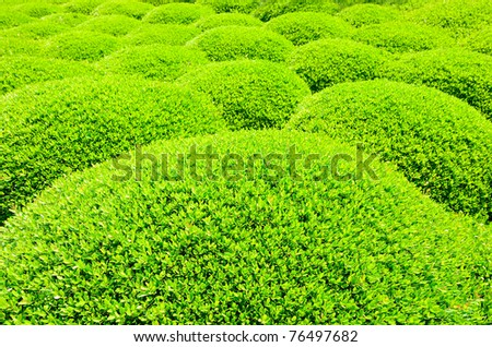 rolling bush abstract - stock photo