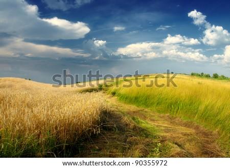 rolling field - stock photo