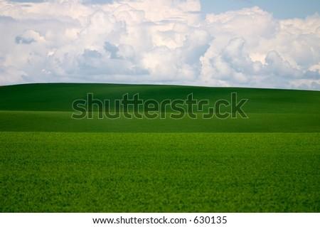 Rolling fields of Wheat, Walla Walla, Washington - stock photo