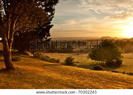Rolling golden pasture and trees at sunrise - stock photo