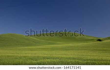 Rolling Green Wheat Fields of the Palouse Country With Blue Sky - stock photo