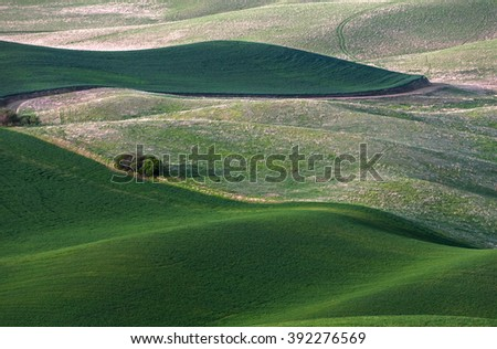 rolling hill and Farm Land, green wheat fields - stock photo