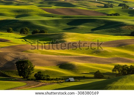 Rolling hills of wheat fields during sunset at Palouse Washington - stock photo