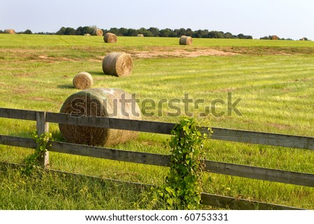 Rolls of hay lay in a field after it has been cut and waits to be hauled to storage. - stock photo
