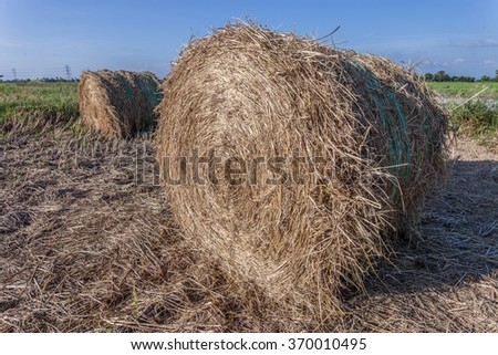 Rolls of haystack during day time in Sungai Besar, Malaysia - stock photo