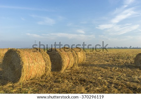 Rolls of paddy straw with natural lighting - stock photo