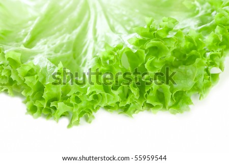 romaine lettuce leaf, on white - stock photo