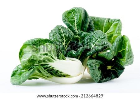 romaine lettuce standing isolated on white,romaine lettuce isolated - stock photo