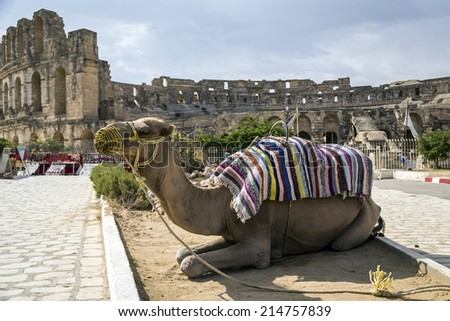 Roman amphitheater of El-Jam, colosseum, Tunisia, with closeup of dromedary - stock photo