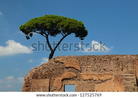 Roman ancient ruins with pine tree against blue sky - stock photo
