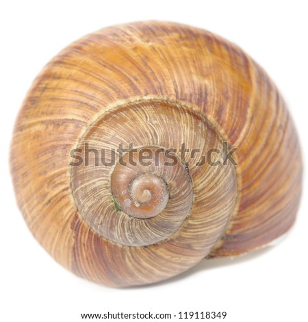 Roman Snail Shell Isolated on White Background - stock photo