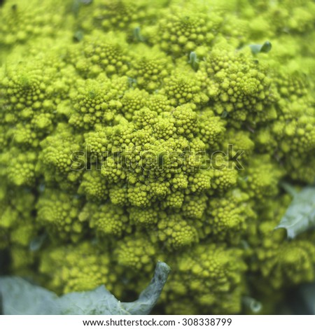 romanesco broccoli with logarithmic spirals with fibonacci number