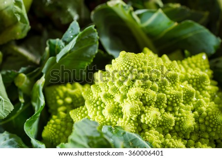 Romanesco cauliflower with its fractal shapes and Fibonacci sequences in focus, with purple broccoli in the foreground and cabbage leaves in the background. - stock photo