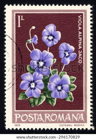 ROMANIA - CIRCA 1979: A stamp printed in Romania shows Alpine violet, circa 1979 - stock photo