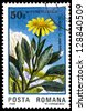 "ROMANIA - CIRCA 1985: A stamp printed in Romania shows flower Senecio glaberimus, with the same inscription, from the series ""50 Years of Retezat National Park"", circa 1985 - stock photo"