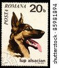 ROMANIA - CIRCA 1971: A stamp printed in Romania shows German Shepherd, circa 1971 - stock photo