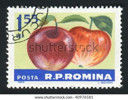 ROMANIA -CIRCA 1963: The apples hangs on a branch, circa 1963. - stock photo