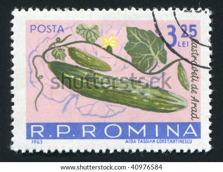 ROMANIA -CIRCA 1963: The Cucumbers hangs on a branch, circa 1963.