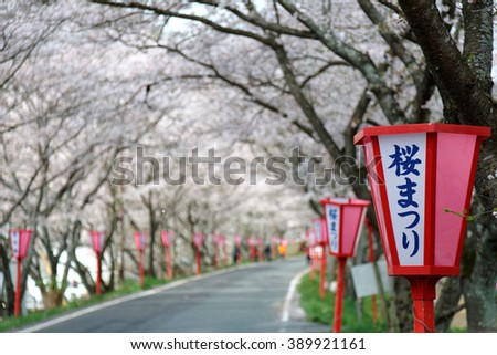 Romantic archway of pink cherry tree blossoms ( Sakura Namiki ) and Japanese style lamp posts along a country road ( blurred background effect ) ~ Beautiful spring scenery in Maniwa, Okayama, Japan  - stock photo