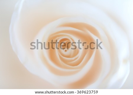 Romantic background made with a fading light pink rose and its petals.