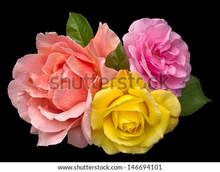 Romantic bouquet of three brightly colored roses in orange, pink and golden yellow. Isolated on black with clipping path included. - stock photo
