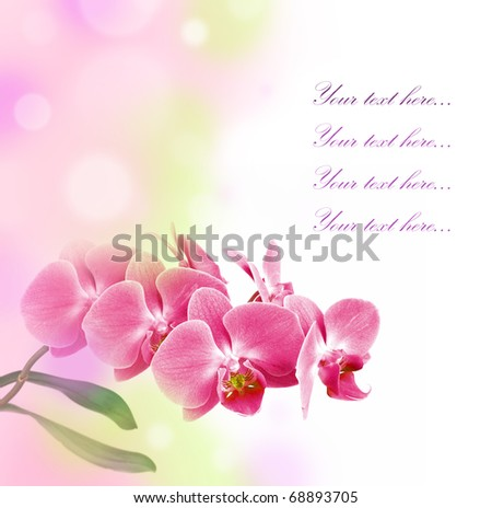 romantic card with pink orchid - stock photo