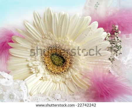 Romantic decoration with white gerbera - stock photo