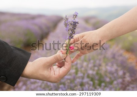 Romantic Flowers for my Wife or Girlfriend. - stock photo