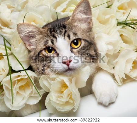romantic kitten - stock photo