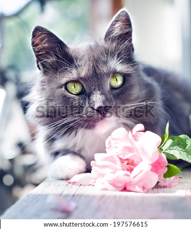 romantic kitten/ cat with beautiful rose flower - stock photo