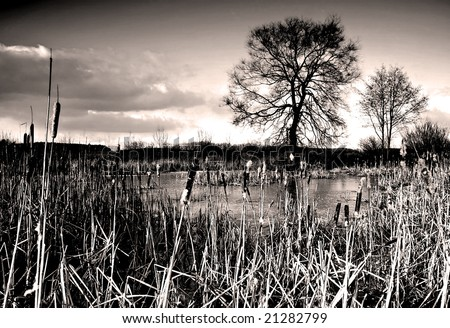 Romantic landscape of frozen lake with bulrush, tree in the back and a dramatic sky with clouds - colored infrared photo - stock photo