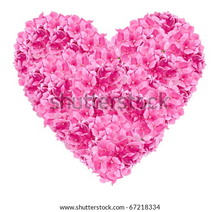 romantic pink heart constructed from pink hydrangea flower heads, isolated on white for valentine day or a romantic celebration - stock photo
