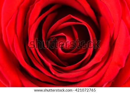 Romantic Red Rose Inside Velvet Petals - stock photo