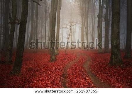 Romantic red trail - stock photo