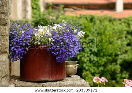 romantic scene with old cooking pot planted with little blue flowers