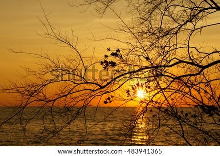 Romantic sea during the sunset with tree silhouette