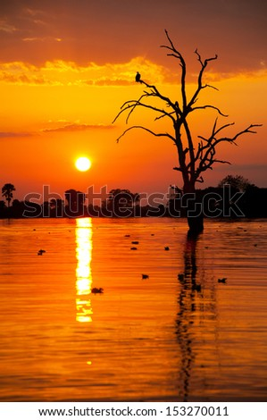 romantic sunset on the lake manze in africa - national park selous game reserve in tanzania - stock photo