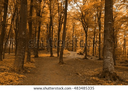 Romantic trail into the forest during autumn