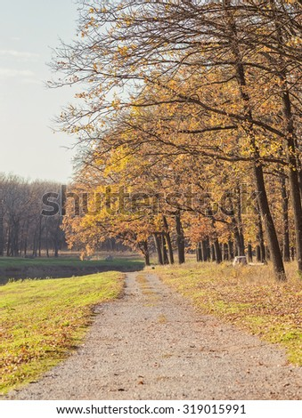 romantic walking path in the lake side in autumn