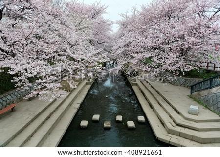 Romantic walkway beneath pink cherry blossoms ( Sakura Namiki ) along a small river bank in Fukiage City, Konosu, Saitama, Japan ~ Beautiful spring scenery of Japanese countryside during sakura season - stock photo