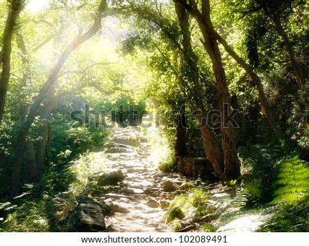 romantic way in the forest - stock photo
