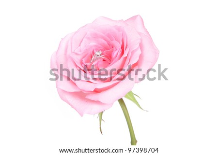 romantic wedding rings on pink rose flower