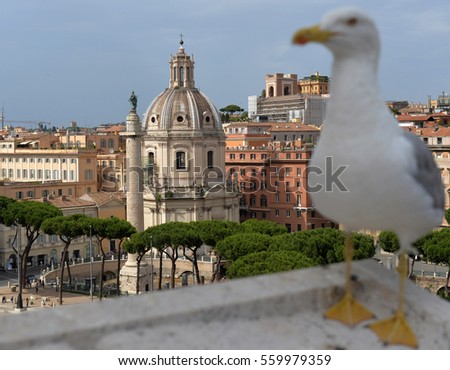 Rome cityscape. Seagull over ancient ruins in Rome. A gull on the outlook above historical center of Rome.
