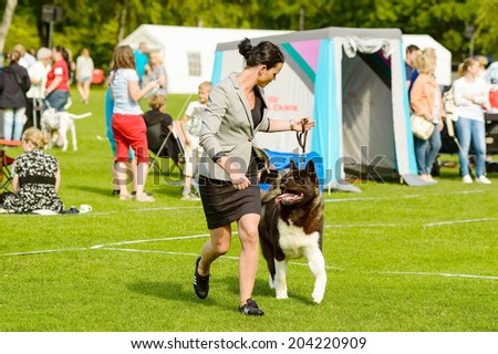 RONNEBY, SWEDEN - JULY 05, 2014: Blekinge Kennelklubb international dog show. Woman running with dog in show ring. - stock photo