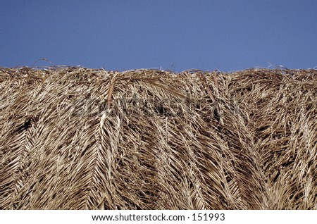 Roof of coconut palm thatch